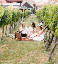 piknik a vino